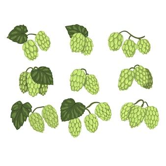 Conjunto de mão desenhada de galhos de lúpulo verde com folhas.