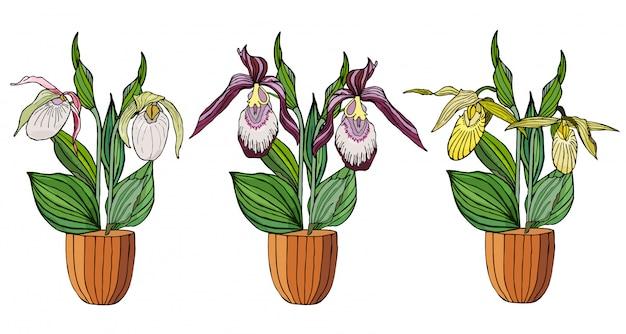 Conjunto de mão desenhada de orquídeas em vasos de flores.