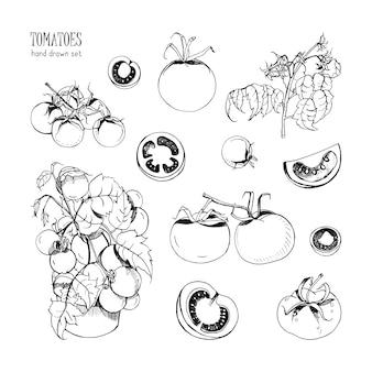 Conjunto de mão desenhada de tomate diferente, ramo, arbusto, parte em um corte. ilustração de contorno.
