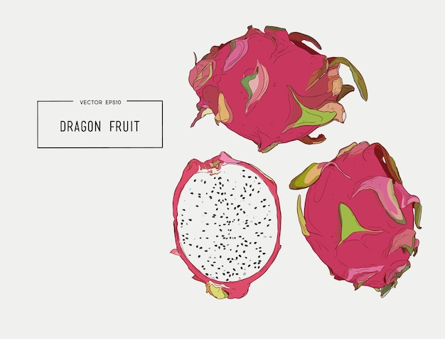 Conjunto de mão desenhada de vetor de pitaya exótica ou fruta do dragão.