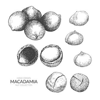 Conjunto de mão desenhada macadamia.