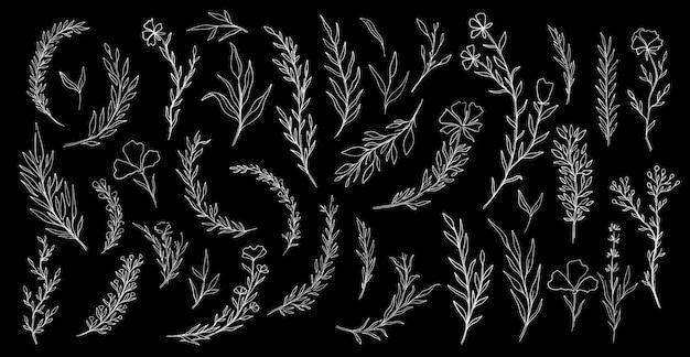 Conjunto de mão desenhada planta natureza