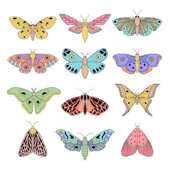 Conjunto de mariposas de mão desenhada