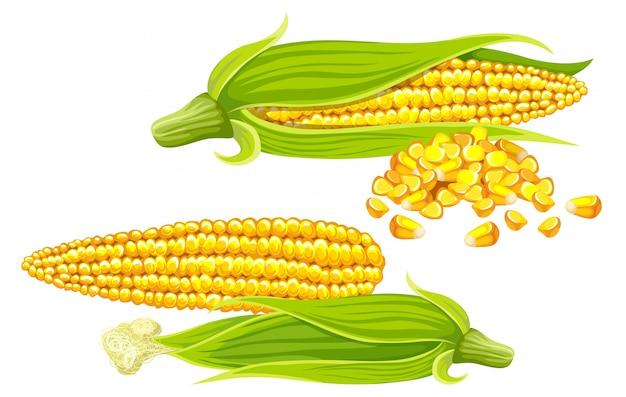Conjunto de milho, sementes e folhas.