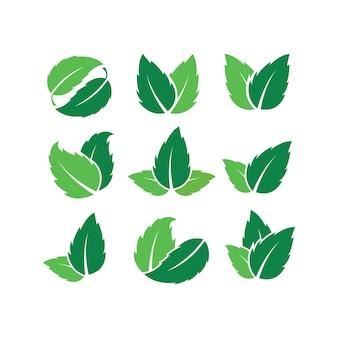 Conjunto de modelo de design de logotipo de folha