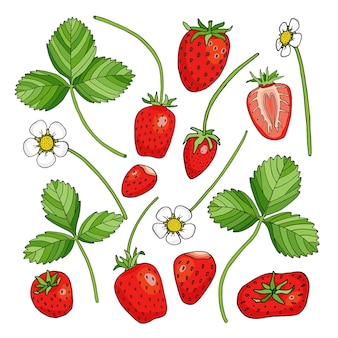 Conjunto de morangos com folhas e flores, desenho animado