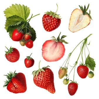 Conjunto de morangos frescos naturais desenhados à mão