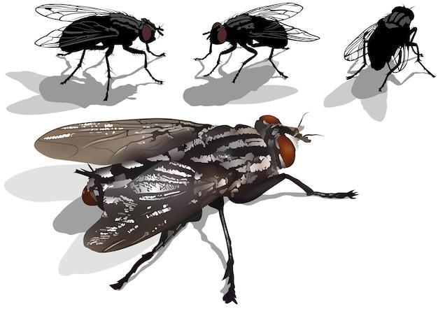 Conjunto de moscas domésticas