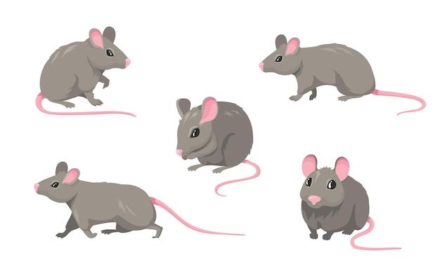 Conjunto de mouse de desenho animado. rato pequeno roedor peludo cinza com cauda sem pêlos rosa andando ou sentado isolado no branco