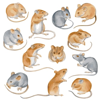 Conjunto de mouses bonitos, vetor de mão desenhada de aquarela ilustração isolado no branco.