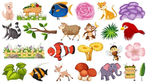 Conjunto de natureza e animais