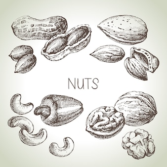 Conjunto de nozes de esboço de mão desenhada. ilustração de comida ecológica