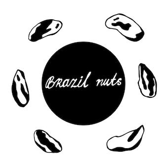 Conjunto de nozes de mão desenhada. contorno preto de uma castanha do brasil em um fundo branco isolado. coleção