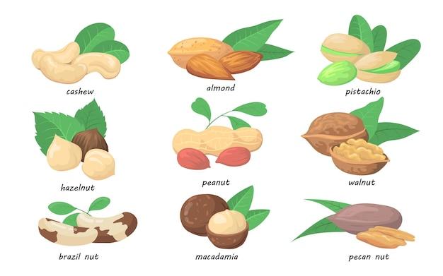 Conjunto de nozes e sementes Vetor grátis