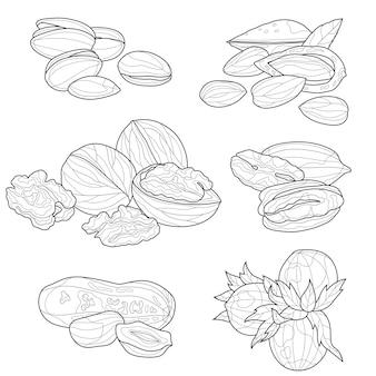 Conjunto de nozes. esboço em preto e branco. livro para colorir anti-stress para crianças e adultos. estilo emaranhado zen. desenho em preto e branco.