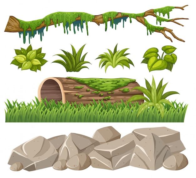 Conjunto de objetos da selva