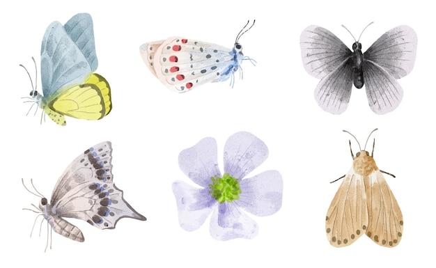 Conjunto de objetos de pintura em aquarela de várias borboletas