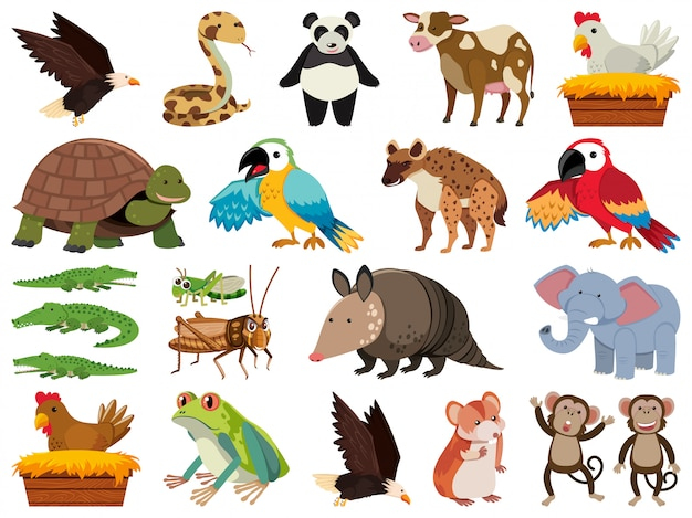 Conjunto de objetos isolados tema animais selvagens