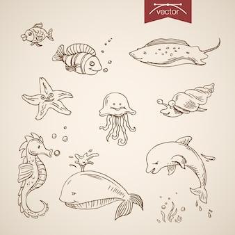 Conjunto de oceano de vida marinha do mundo subaquático.