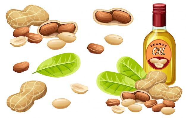 Conjunto de óleo de amendoim, sementes e folhas.