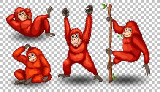 Conjunto de orangotango em fundo transparente