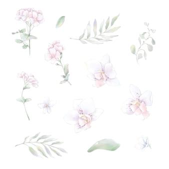 Conjunto de orquídeas flores em aquarela, ilustração em aquarela isolada