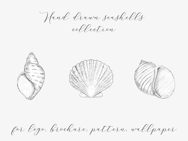 Conjunto de ostra de molusco de vieira desenhada à mão elemento de logotipo de conchas do mar vintage para resort e restaurante spa