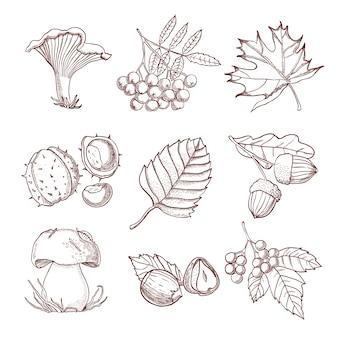 Conjunto de outono de mão desenhada