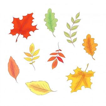 Conjunto de outono e folhas de mão desenhada