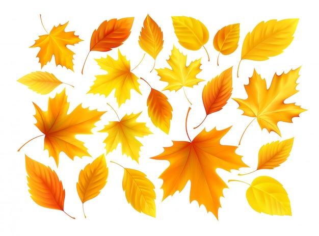 Conjunto de outono realista amarelo, vermelho, laranja deixa isolado em um fundo branco.