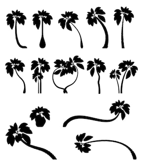 Conjunto de palmeiras tropicais com folhas maduras e plantas jovens. silhuetas negras isoladas
