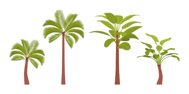 Conjunto de palmeiras
