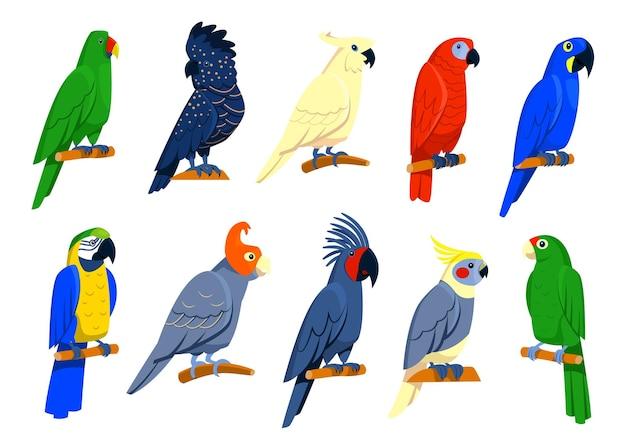 Conjunto de papagaios tropicais brilhantes.