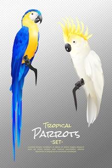 Conjunto de papagaios tropicais realistas