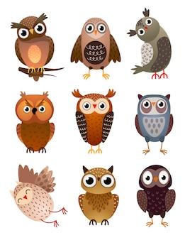 Conjunto de pássaro coruja diferente bonito, com penas coloridas e olhos grandes. estilo de desenho animado.