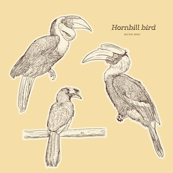 Conjunto de pássaro hornbill, mão desenhar desenho vetorial.