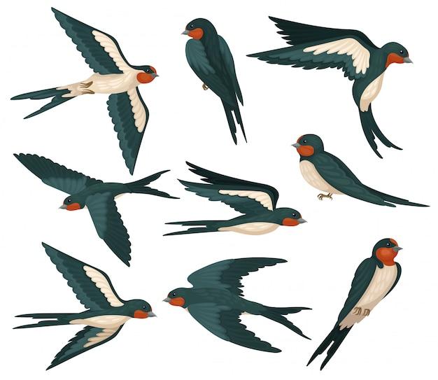 Conjunto de pássaros andorinhas voando em várias vistas, bando de pássaros com plumagem colorida ilustração sobre um fundo branco