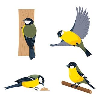 Conjunto de pássaros chapim em diferentes poses, isolado no fundo branco.