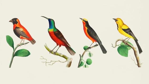 Conjunto de pássaros coloridos