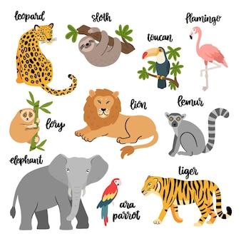 Conjunto de pássaros e animais selvagens exóticos que vivem na savana ou na selva tropical