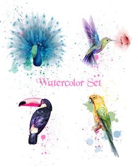 Conjunto de pássaros em aquarela com pavão, papagaio e beija-flor