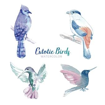 Conjunto de pássaros em aquarela