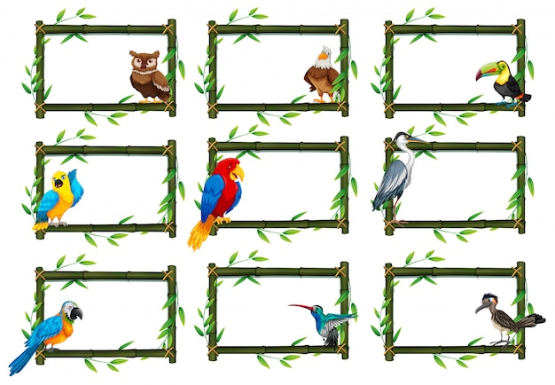 Conjunto de pássaros em cenas da natureza