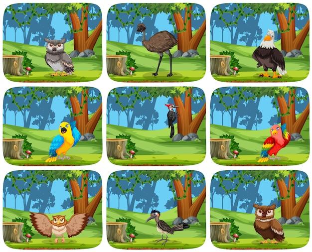 Conjunto de pássaros em cenas de madeira