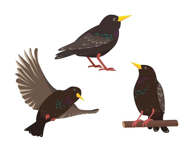 Conjunto de pássaros estorninhos em diferentes poses, isolados no fundo branco
