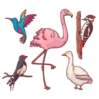 Conjunto de pássaros exóticos e domésticos