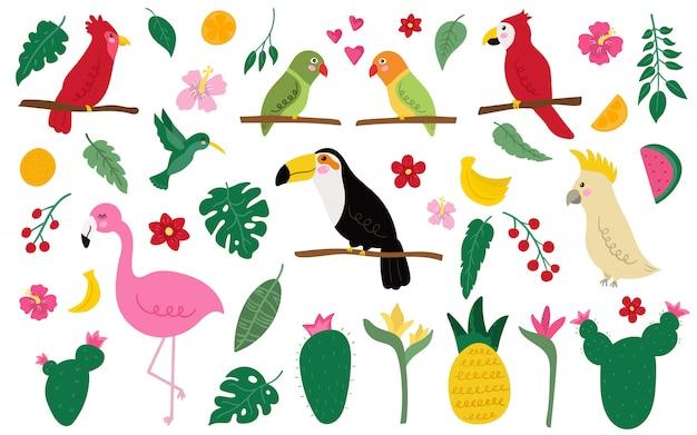 Conjunto de pássaros exóticos e elementos.