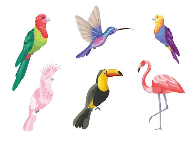 Conjunto de pássaros tropicais natureza exótica