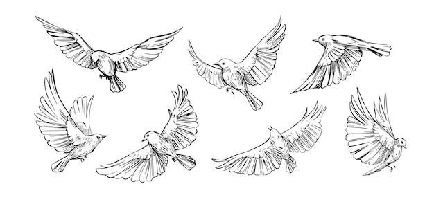 Conjunto de pássaros voando. contornos vetoriais