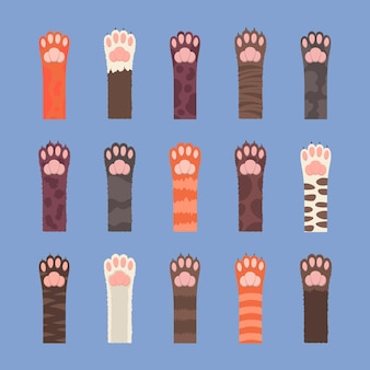 Conjunto de patas fofas de gatos multicoloridos